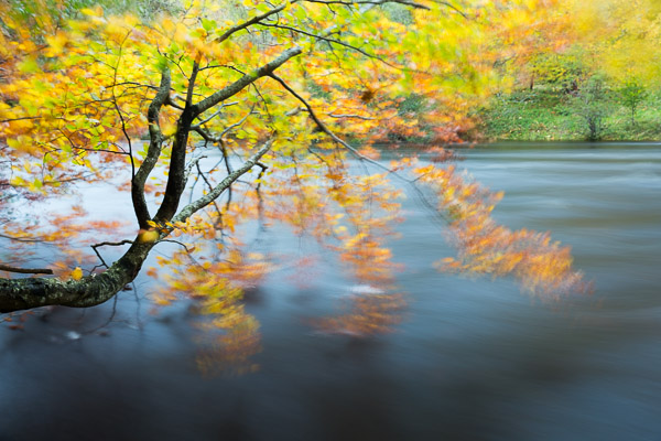 autumn_by_the_river.jpg