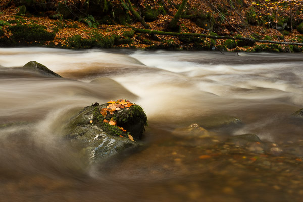 beech_leaves_by_the_river.jpg