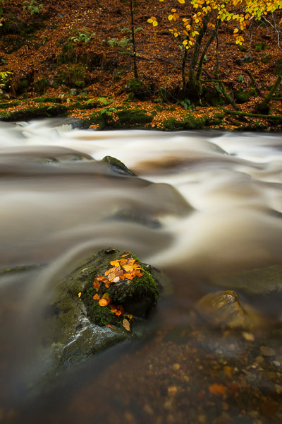 beech_leaves_by_the_river_2.jpg