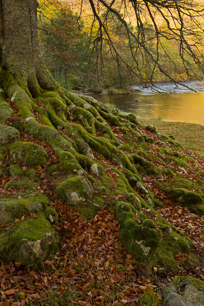 roots_by_the_river.jpg