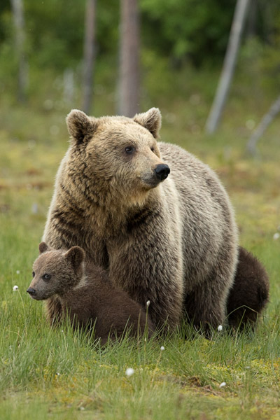 mum_and_cubs.jpg