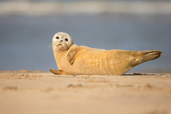 seal_pup_sunbathing.jpg