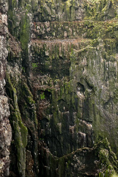 birdcliffs_at_latrabjarg__3_of_4_.jpg