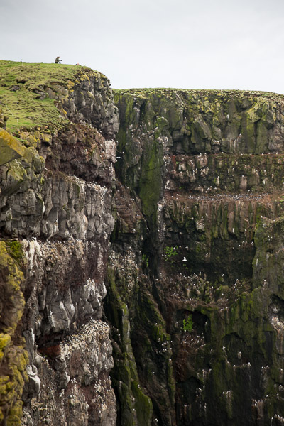 birdcliffs_at_latrabjarg__4_of_4_.jpg