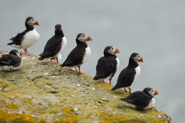 4719-puffin_committee.jpg