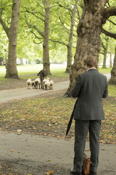 royal_parks_st_james_sheep-7228.jpg