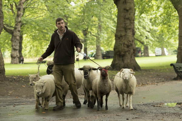 royal_parks_st_james_sheep-7254.jpg