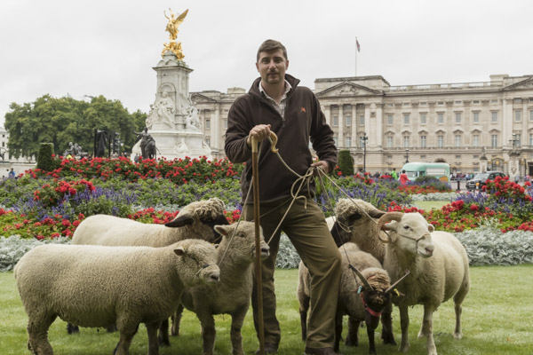 royal_parks_st_james_sheep-7526.jpg