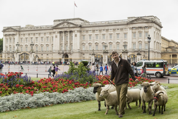 royal_parks_st_james_sheep-7588.jpg