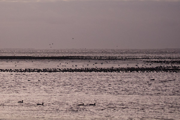 last_light_at_snettisham-8.jpg