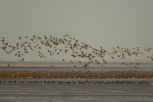wild_fowl_over_snettisham.jpg