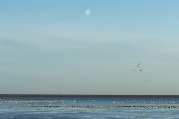 winter_morning_at_snettisham-4.jpg
