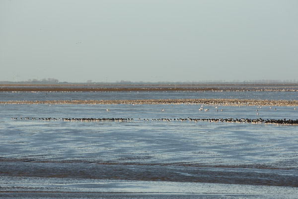 winter_morning_at_snettisham-6.jpg