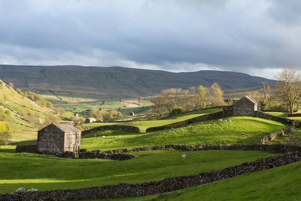 evening_light_in_swaledale.jpg